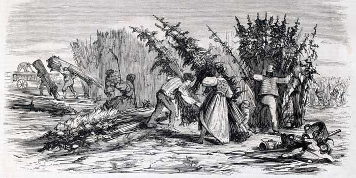 Storia della canapa <span>una pianta utilizzata da più di 10.000 anni</span>