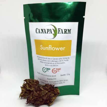 Sunflower busta 1.5 gr