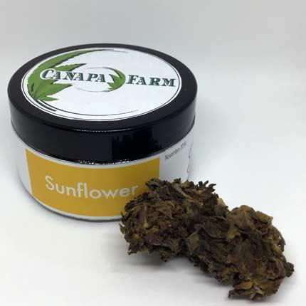 Sunflower vasetto 5 gr
